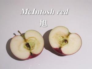 アップル社のロゴになった林檎3